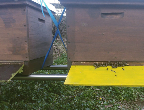 Bienen im Freudental